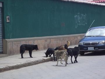 Registran 3 casos de rabia canina en el Departamento