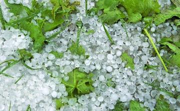 El granizo destruye verduras y frutas en el municipio de Vitichi
