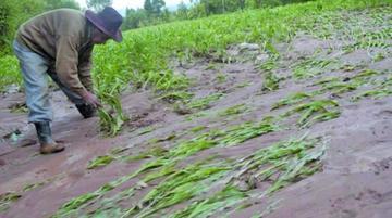Gobierno: hay 50.000 hectáreas afectadas por lluvias e inundaciones