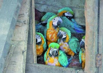Rescatan aves silvestres que iban a ser traficadas