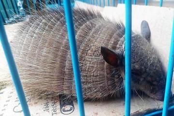 Más de 120 animales silvestres fueron decomisados en La Paz en 2017