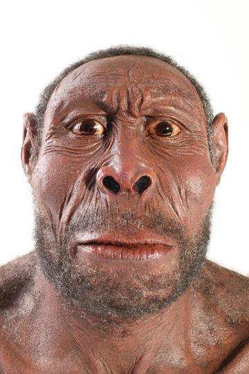 Los primeros  Homo sapiens van a Arabia
