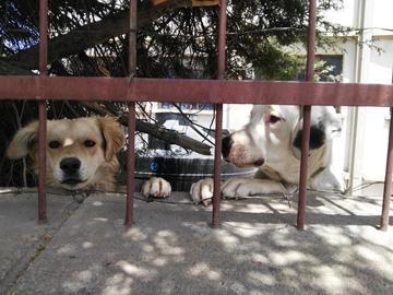 Planifican la campaña de vacunación canina en junio
