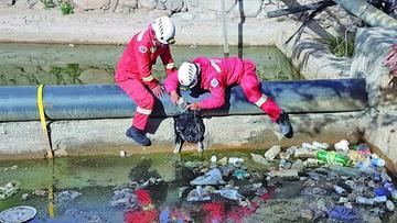 Rescatan a perro de un estanque de agua
