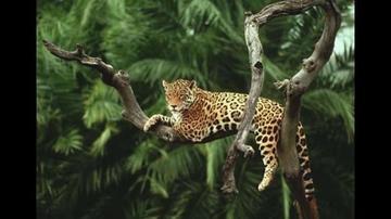 Confirman que en Bolivia está la mayor biodiversidad del mundo