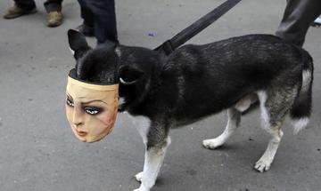 """""""Firulais"""", el perro que nunca falta en las protestas de Nicaragua"""