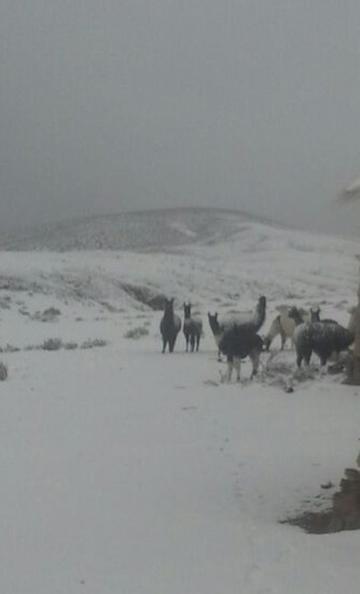 Temen que los animales queden atrapados en medio de la nevada