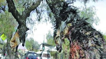 Indagan presunto biocidio tras encontrarse pieles de perros en un árbol