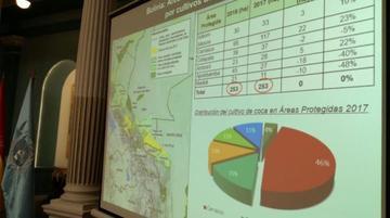 Plantaciones de coca en Bolivia se incrementan en 6 por ciento
