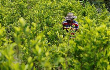 Colombia confirma secuestro de campesinos en la frontera