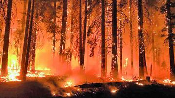 Gobierno acusa a ambientalistas de causar el incendio en EE.UU.