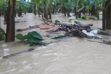 Desborde de 2 ríos afecta plantaciones