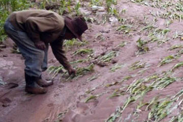 Garantizan acceso a los alimentos pese a los desastres naturales