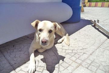 Reportan varios casos de mordeduras de perros a personas en el municipio