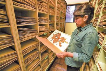 Boliviana recopila valor de las plantas tradicionales