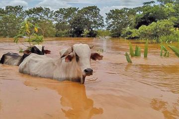 Declaran alerta roja ante posibles desbordes de ríos