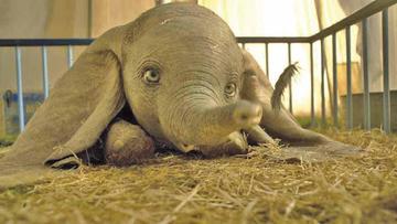 Hoy se estrena Dumbo en EE.UU.