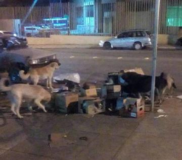 Piden controlar la población de canes vagabundos