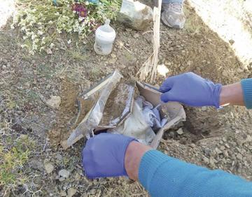 Encuentran una tumba clandestina de recién  nacido en Llallagua