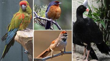 Bolivia está en el quinto lugar en variedad de aves