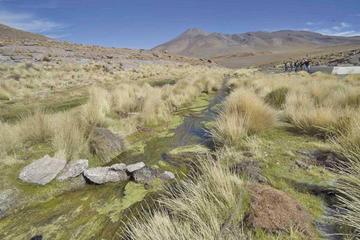 Gobierno no revelará acciones en defensa de las aguas del Silala