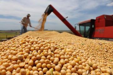 Evo anuncia medidas de exportación ante la caída de precios de la soya