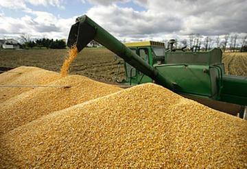 Suben cupo de exportación de soya hasta 60 por ciento