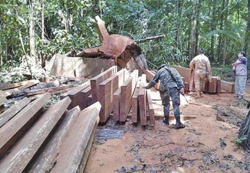 Detienen a 7 peruanos que traficaban madera