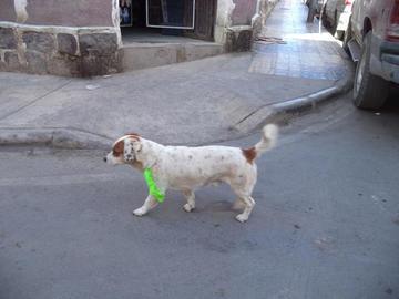 Continuarán vacunando a cachorros en el municipio