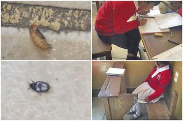 Hallan bichos en escuela y mobiliario en mal estado