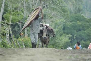 Consejo Noruego alerta de 830 desplazados en región colombiana