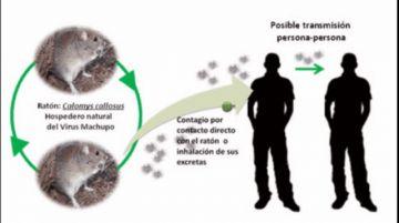 La OPS recuerda que el arenavirus es sumamente peligroso