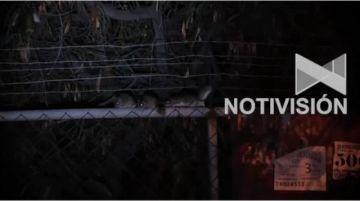Impresionante proliferación de ratas en la Universidad San Simón de Cochabamba