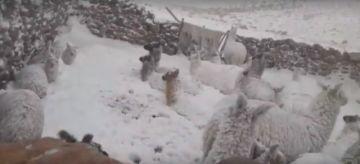 Rescatan a pasajeros y animales en el sudoeste potosino