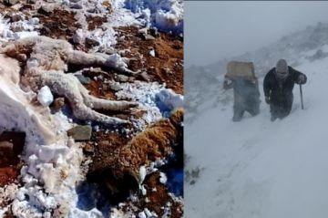 Cuatro municipios de Potosí están en emergencia por las nevadas