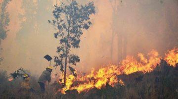 Incendios destruyeron cerca de 101 hectáreas de vegetación