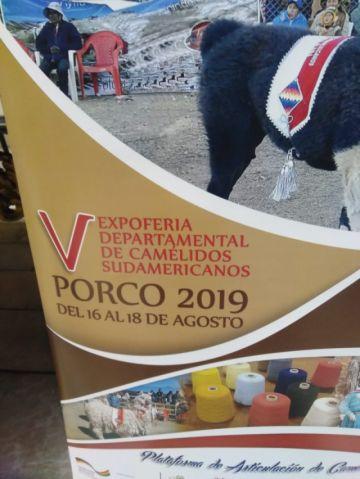 Lanzan laV Expo Feria Departamental de Camélidos municipio de Porco