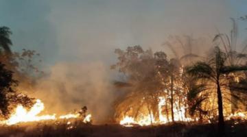 Defensa informa que al menos 10 comunidades en Roboré siguen afectadas por el fuego
