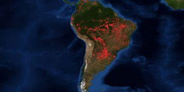 El fuego consume la Amazonía y hay miles de especies amenazadas