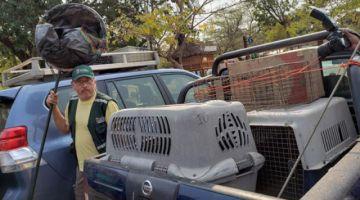 Habilitan refugios para animales silvestres afectados en la Chiquitanía