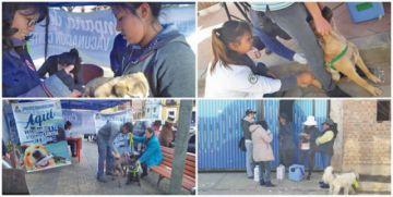 Vacunación antirrábica llegó al 50 % el primer día en el municipio