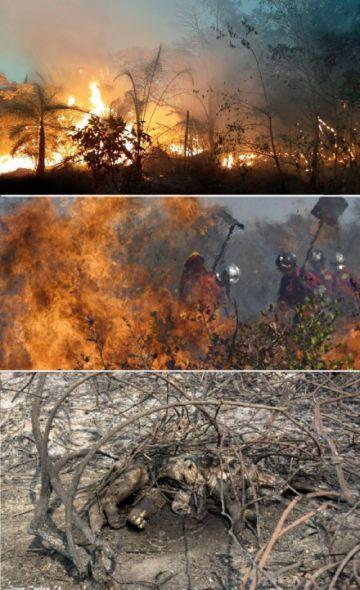 Los incendios afectaron a ocho áreas protegidas en todo el país