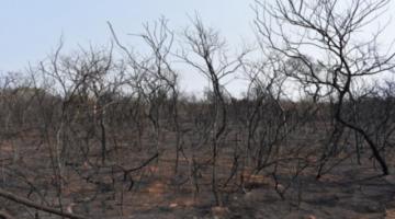 Chiquitania: Estiman pérdidas por $us 1.140 millones por incendios e impacto irreversible