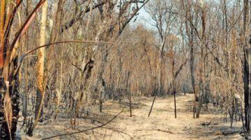 Santa Cruz: ley ambiental prohíbe asentamientos en áreas afectadas