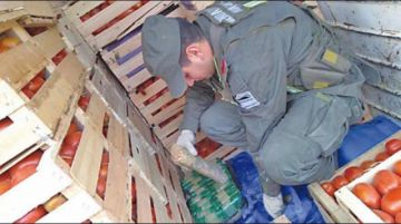 Encuentran cocaína oculta en tomates