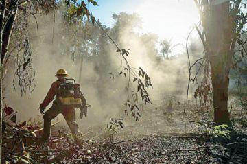 Identifican clan mafioso en incendios en Amazonía