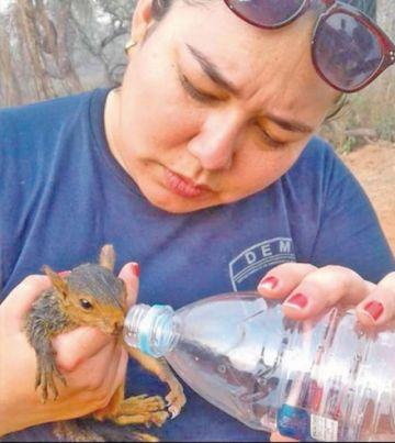 Una ardilla fue rescatada del fuego en la comunidad Candelaria de San Matías