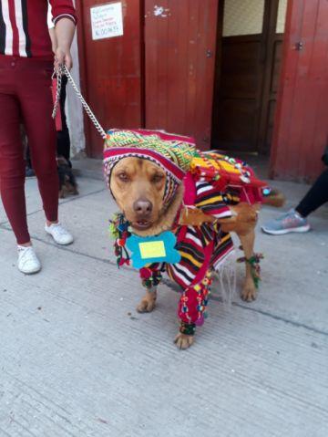 San Roque realiza concurso de perritos