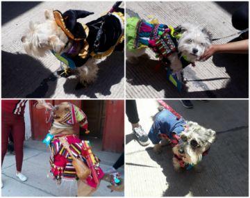 La Parroquia de San Roque realizó concurso canino de disfraces
