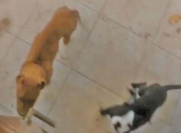 Alcaldía encuentra perros que una portera ocultaba